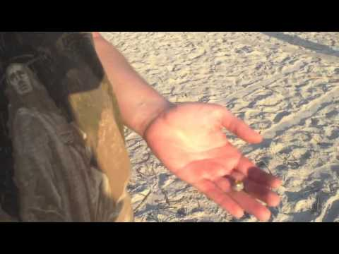 Metal Detecting Etrac – Beach and Park Hunting plus Palmetto Digger